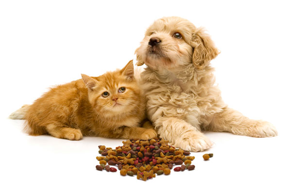 Kitten and puppy behind pile of kibble