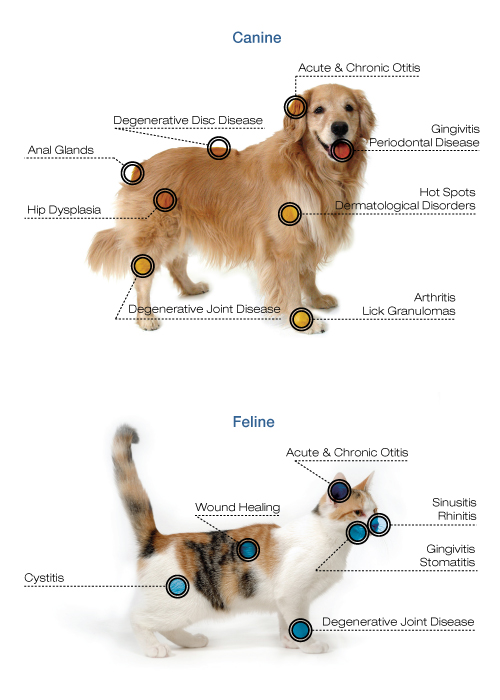 companion-comparison DOG