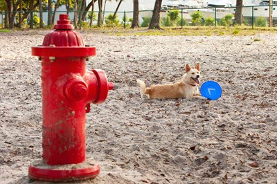 image for National Pet Fire Safety Day
