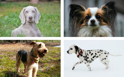 image for The Origins of 10 Nicknames of Dog Breeds