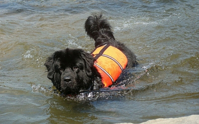 image for 10 summer safety tips for your pets